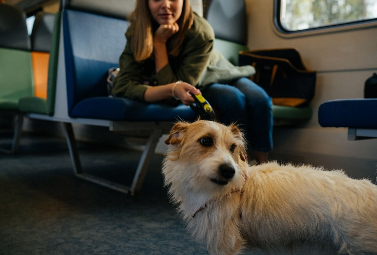 How to Travel Overseas with Your Furkid